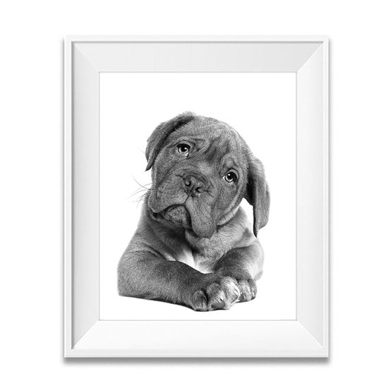 animals photos, animals prints, dog print,